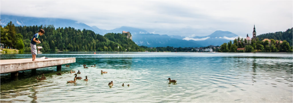 Lake Bled ducks